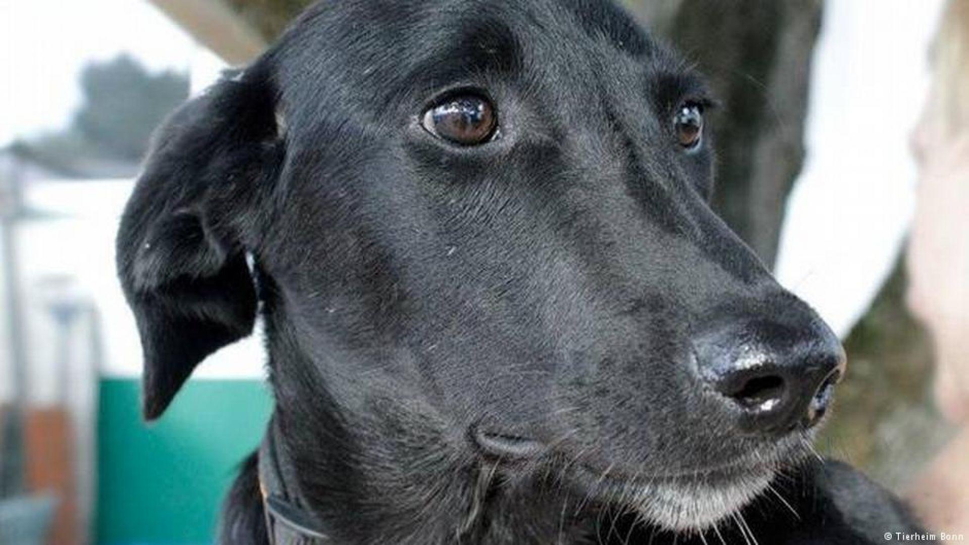 Осиновено българско куче герой в Германия спаси стопанката си от зловещ пожар, но не и себе си