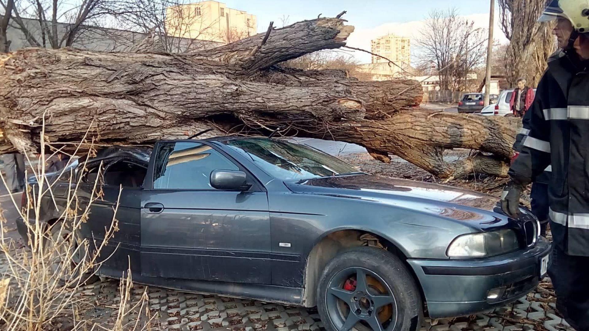 Съборена от буря топола смачка 4 коли в Добрич (снимки)