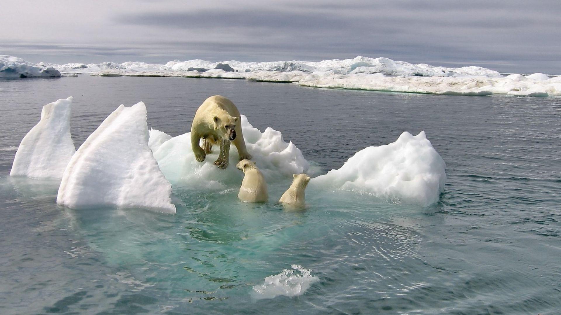 С колко е намалял арктическият лед за 40 години (видео)