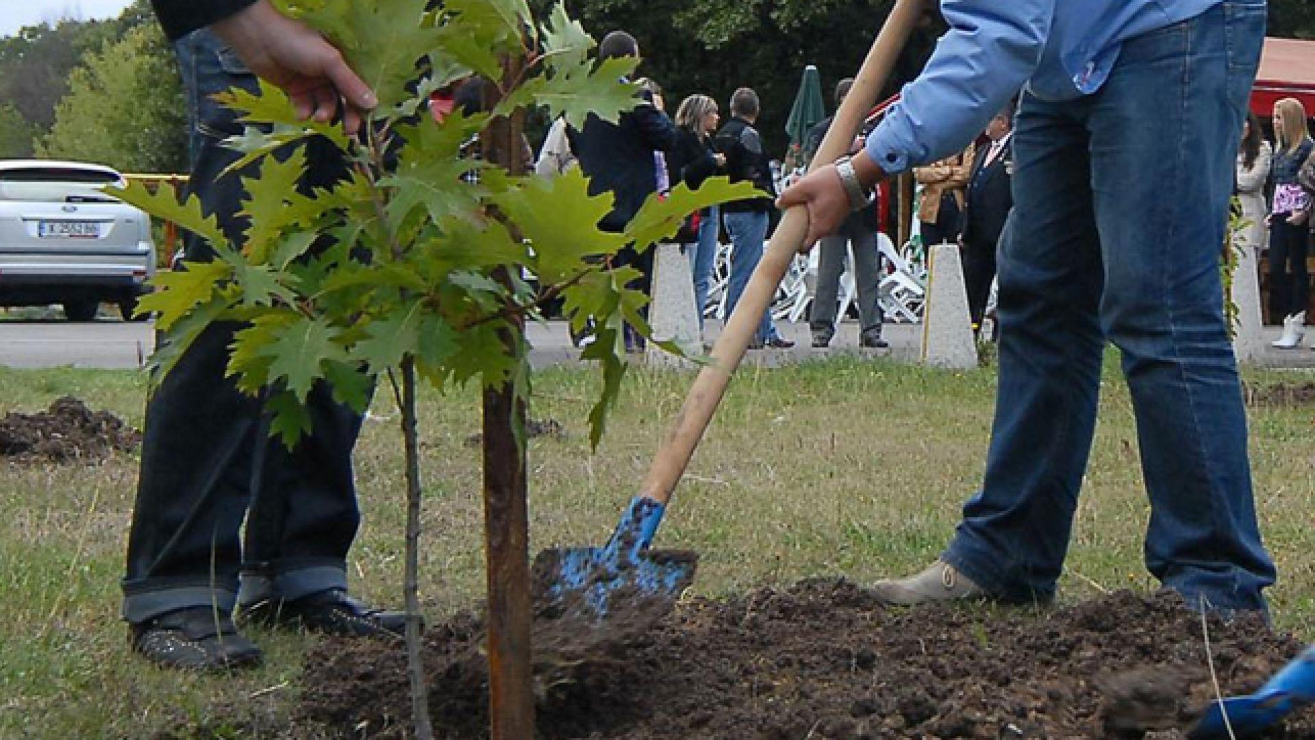 Озеленяват Варна с повече от 700 дървета и храсти