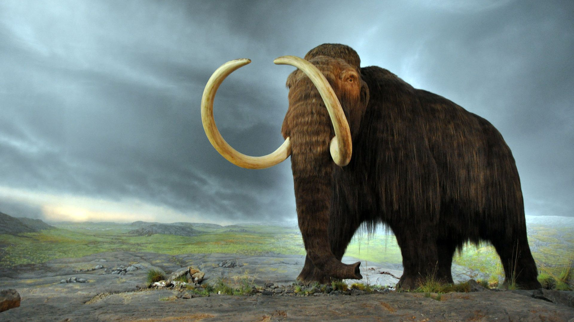 Учени извлякоха най-старата ДНК от зъби на сибирски мамут