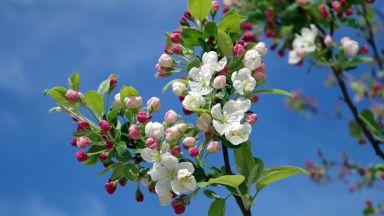 Пролетта напредва: топло и сухо през следващите дни