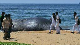 Намериха мъртъв кит с 40 кг найлонови торбички в стомаха