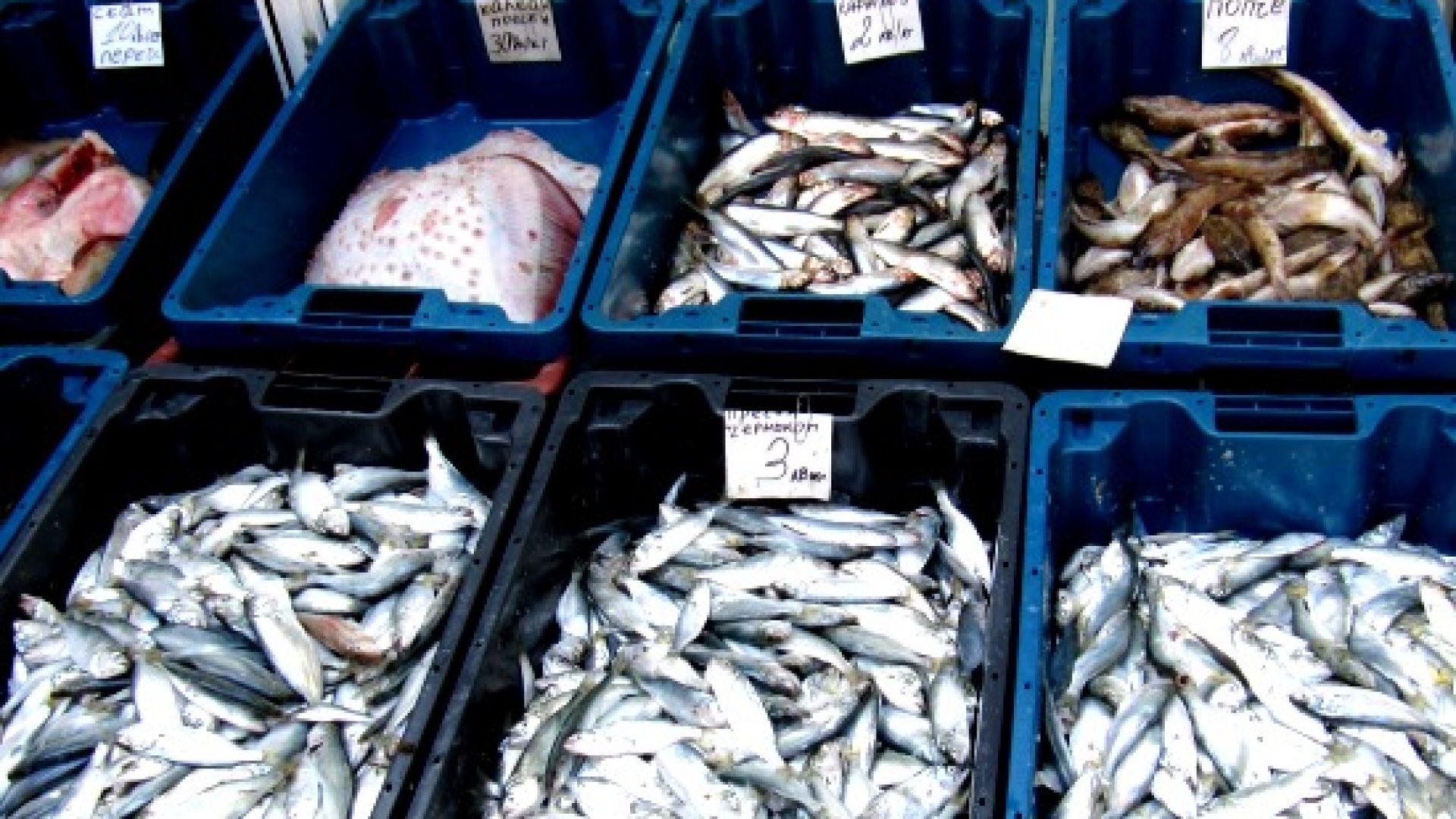 По около половин тон улов на ден имат рибарите от