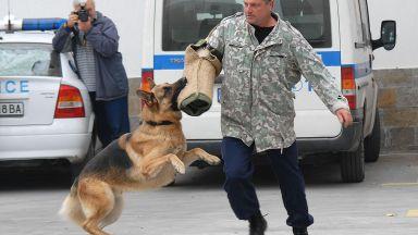 Полицейски кучета влизат в зрелищна акция в Пловдив