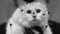 Котката на Лагерфелд с колекция в негова памет