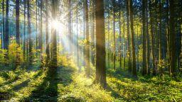 Днес е денят на горите (галерия страхотни снимки)