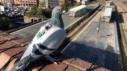 Гълъби събират метеорологични данни и отчитат замърсяванията