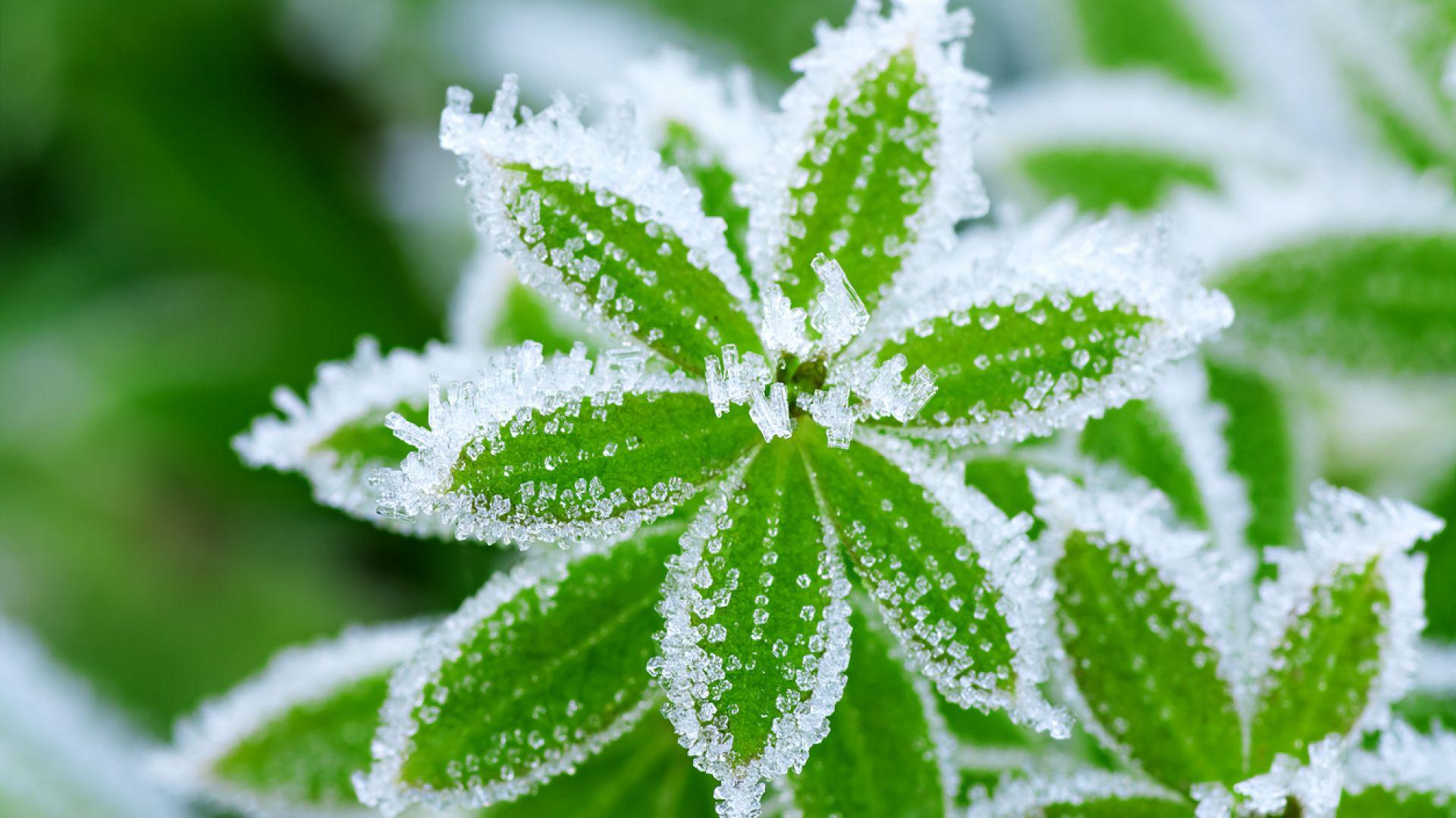Сухо и топло до неделя, зимата се завръща в понеделник