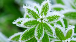 Сутрин остава хладно, със слани, но денем се затопля с по няколко градуса