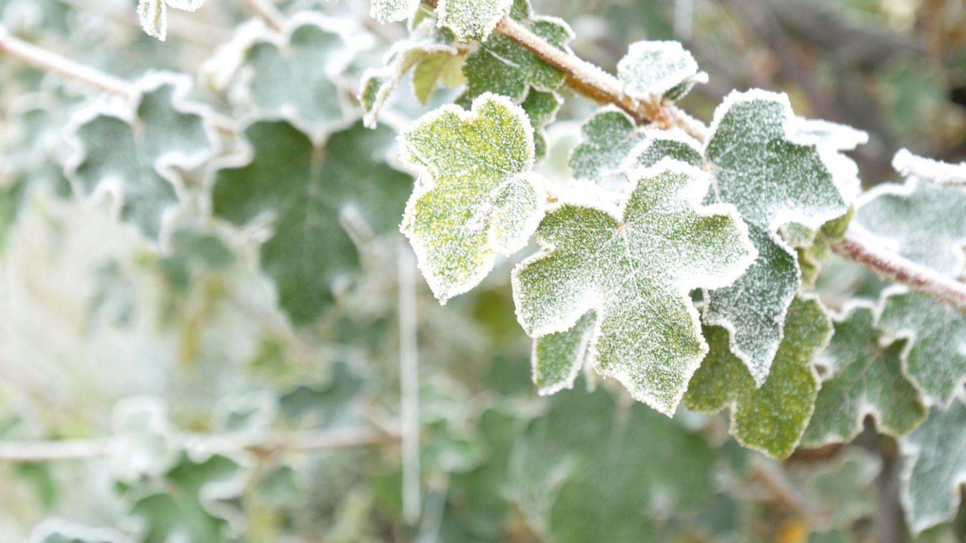 Все по-студено: зимни температури до минус 5 в края на седмицата