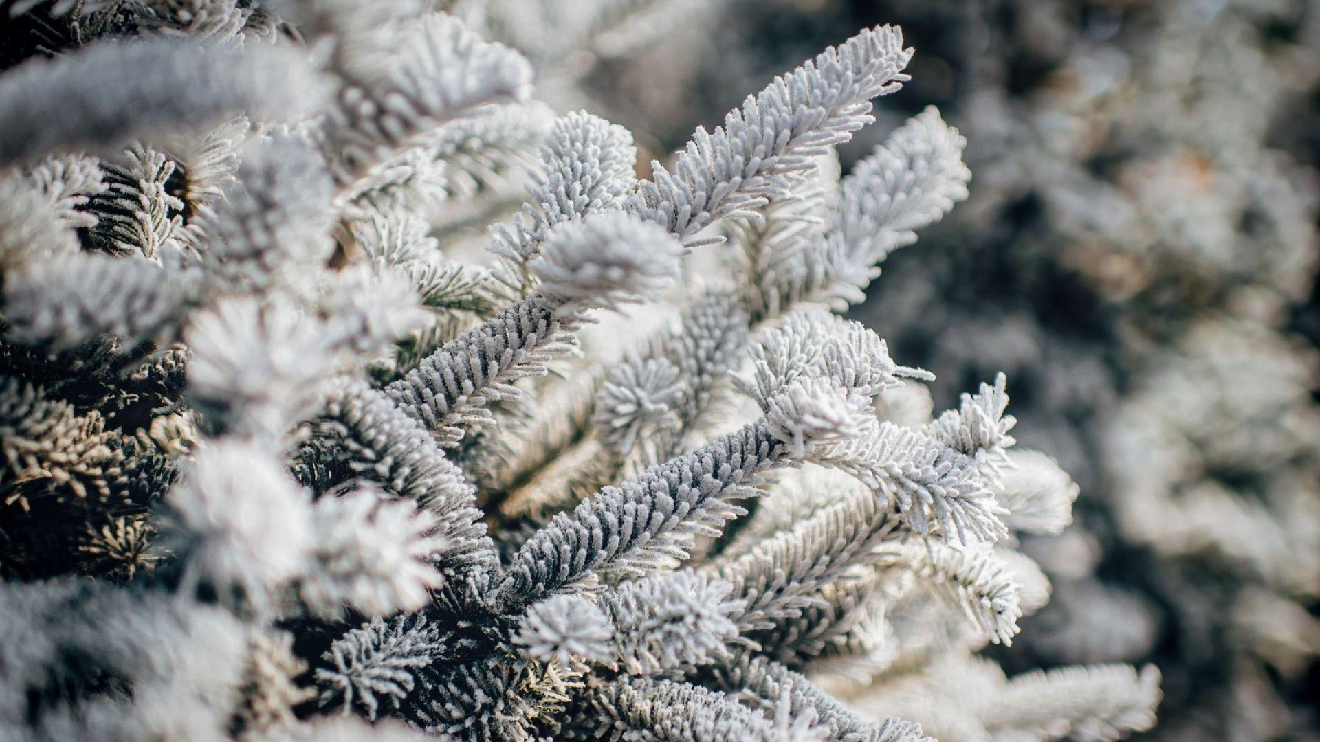 Вятър, студ и сняг се редуват с по-меко време до средата на месеца