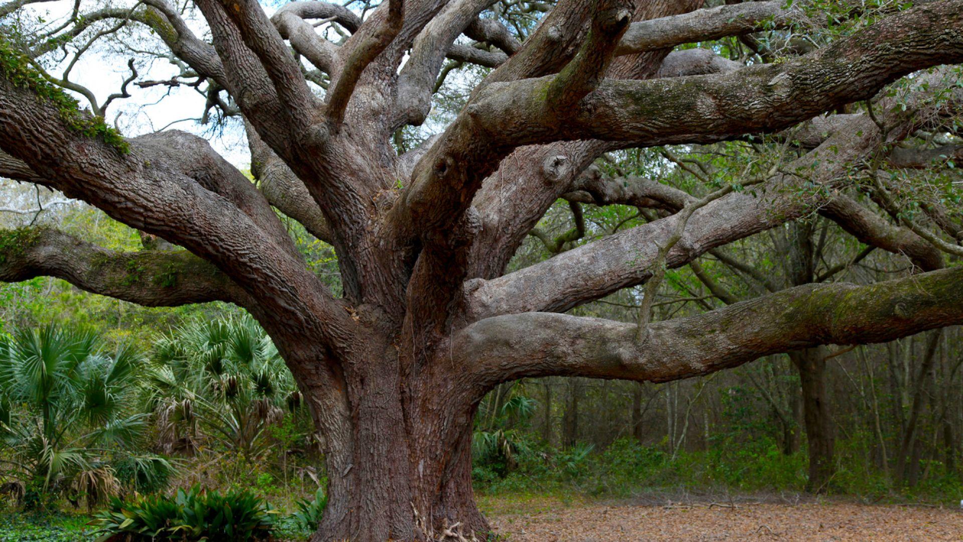 Дванадесет дървета, които си заслужава да се видят (галерия)