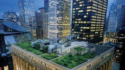 """Атрактивни градини, """"кацнали"""" на покривите на сградите"""