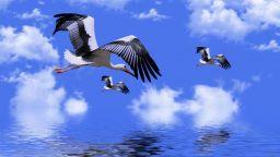 Днес е и международният ден на птиците (галерия)