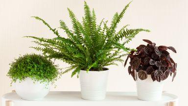 Растенията, които наистина прочистват въздуха вкъщи