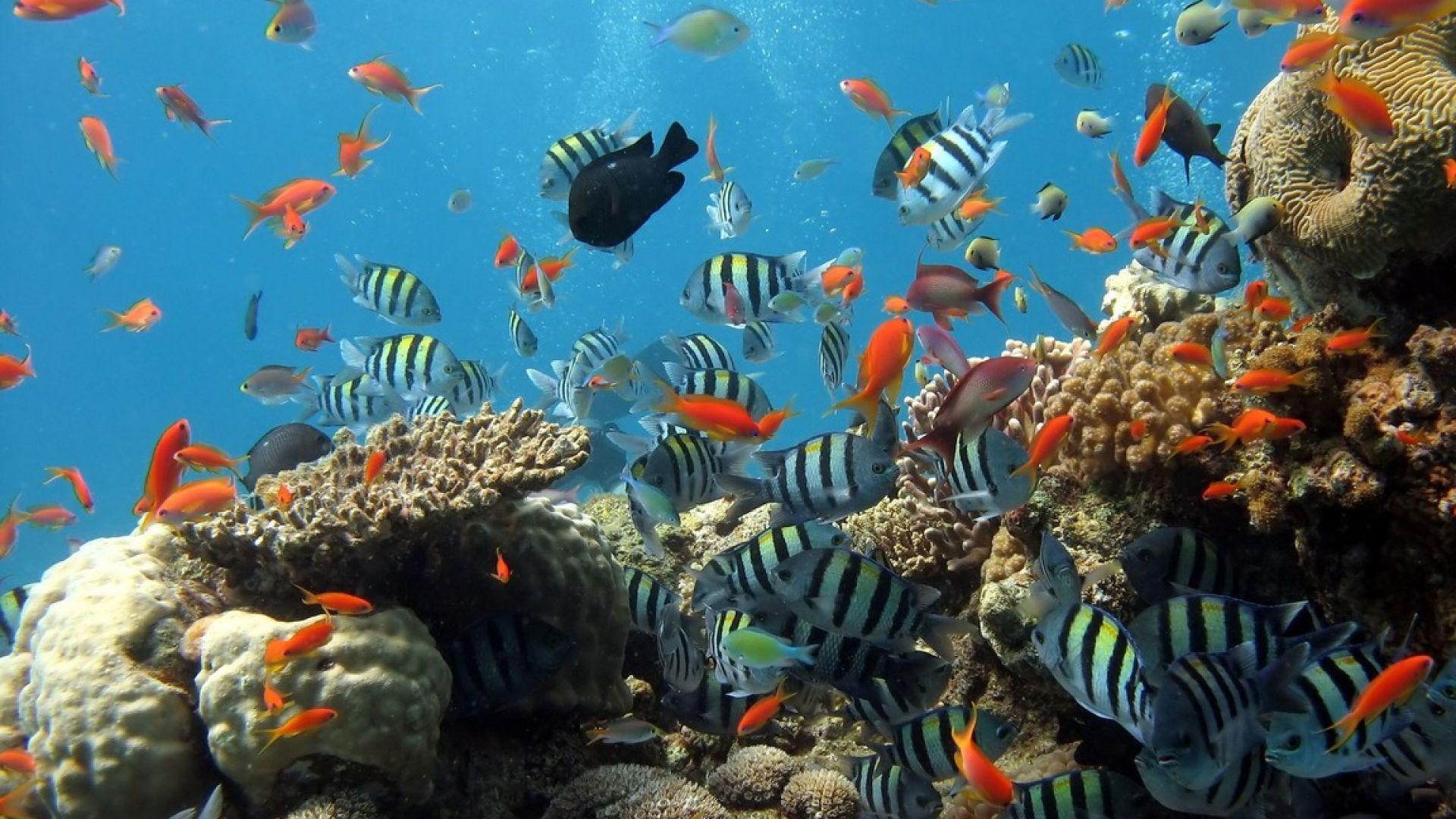 Затоплянето забавя възстановяването на Големия бариерен  риф