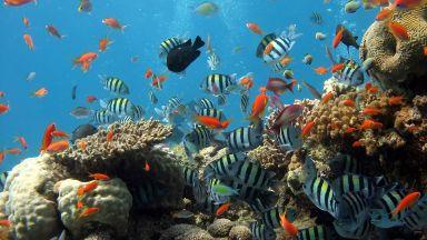 Кораловите рифове в целия свят може да изчезнат до 2100-ата г.
