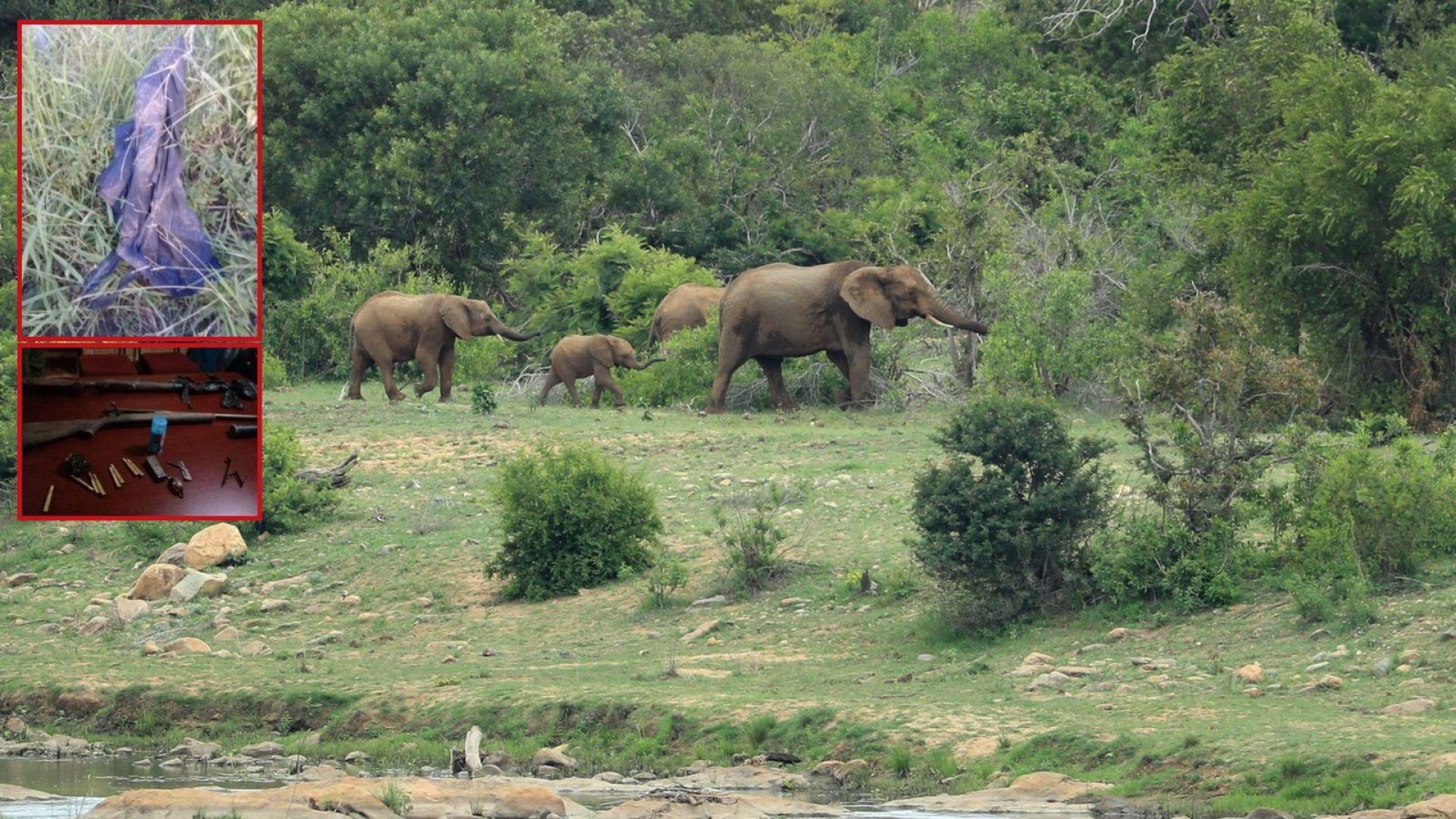 Бракониер убит от слон и изяден от лъвове в един от най-големите резервати в света