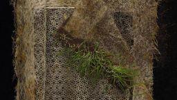 Художник изследва тайния живот на интелигентните растения
