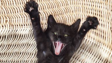 Коя е грешката, която стопаните на котки най-често допускат