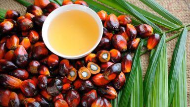 Палмовото масло виновно и за промяната на климата?
