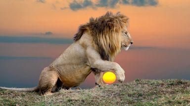 Гигантски лъв, тежащ 1,5 тона, е живял преди 23 милиона години