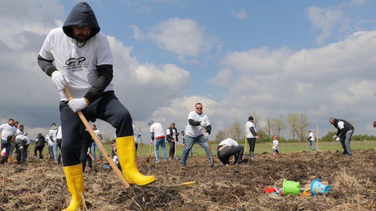 "Над 3000 дървета засадиха 150 доброволци от ""Джи Пи Груп"" АД"