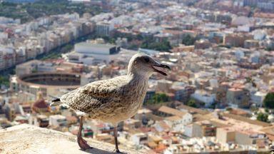 Наводнения в Испания, виновен е циклонът Теодор (видео)