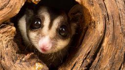 Милион растения и животни са застрашени от изчезване