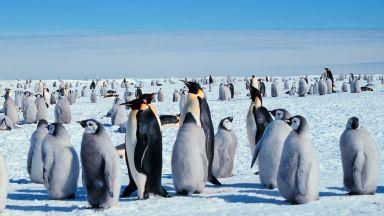 Масово измиране на бебета императорски пингвини в Антарктида