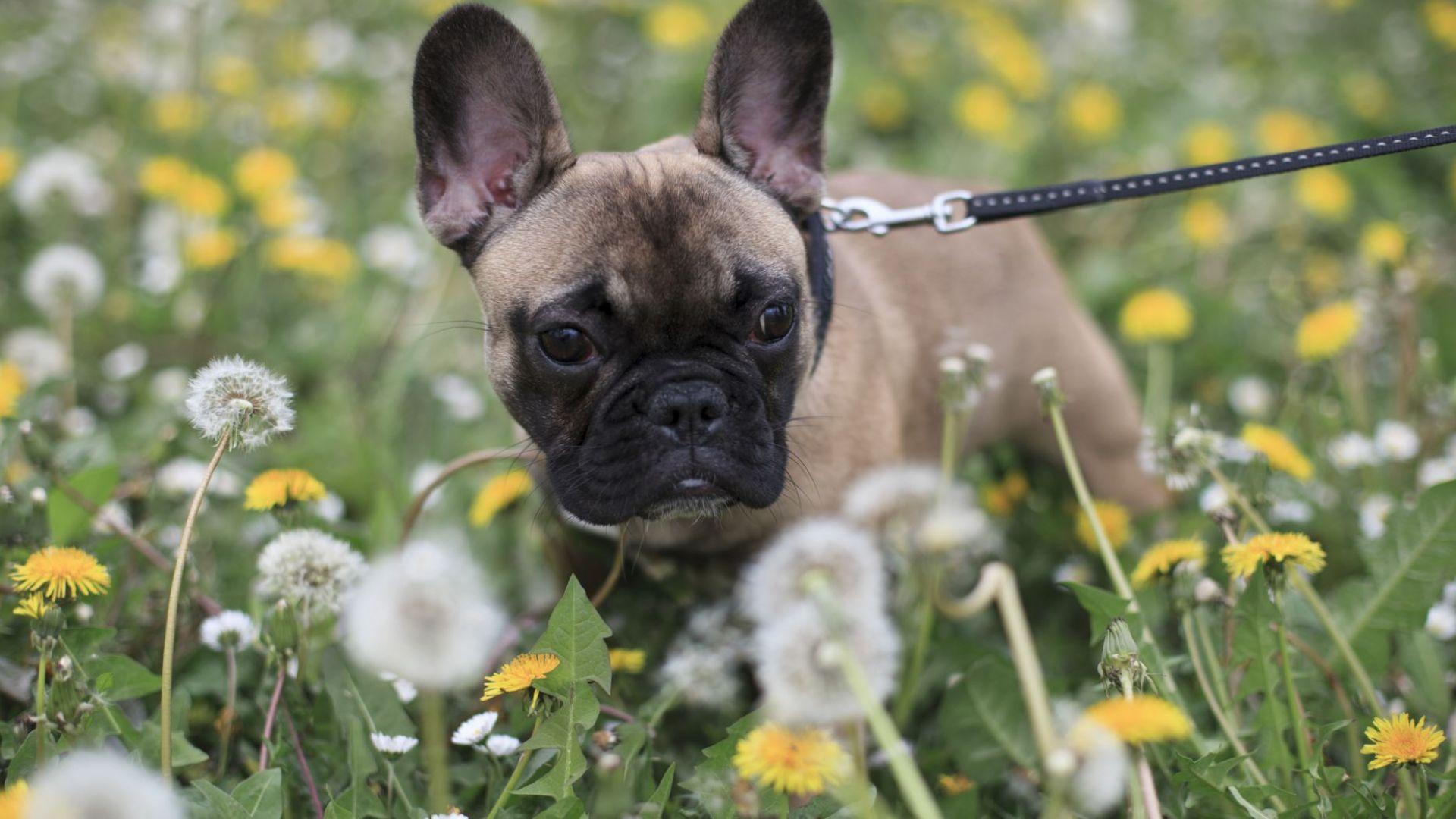 Станаха известни най-популярните кучешки имена за 2020 г.