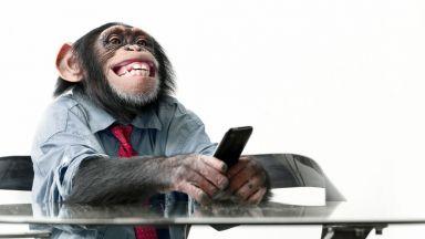 Време ли е за Шимпстаграм? Маймуната, която изуми света (видео)