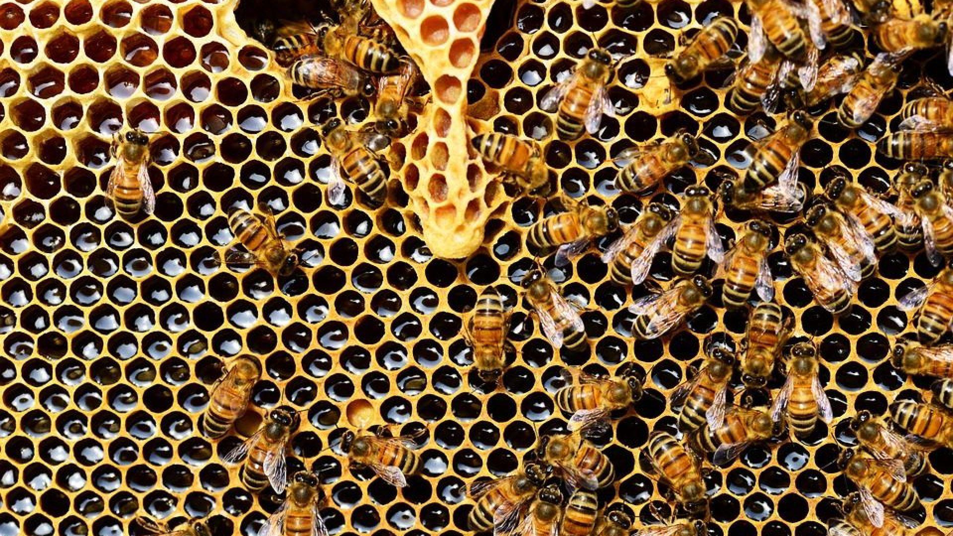 Хиляди пчели измират у нас - отровени ли са?