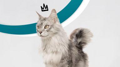 Стартира първата академия за котки инфлуенсъри