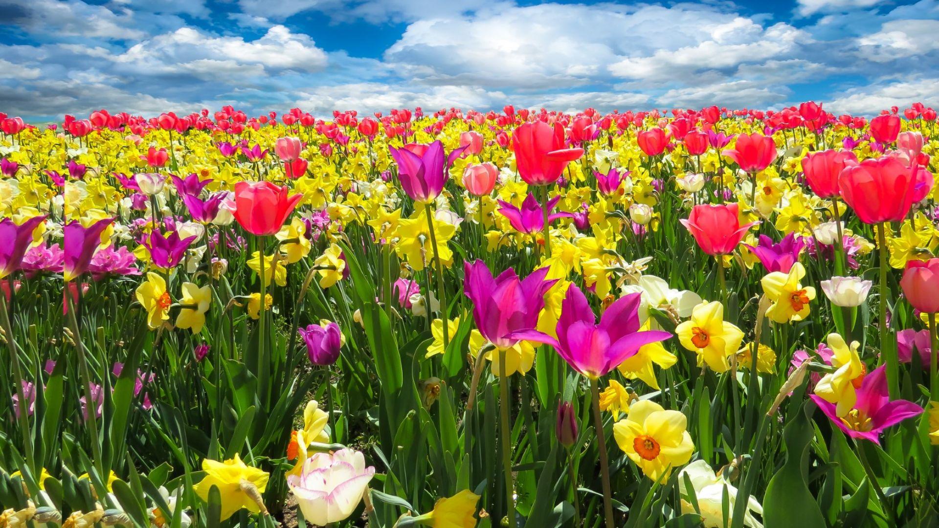 Пролетта продължава: от минус 3 до почти 30 градуса през април