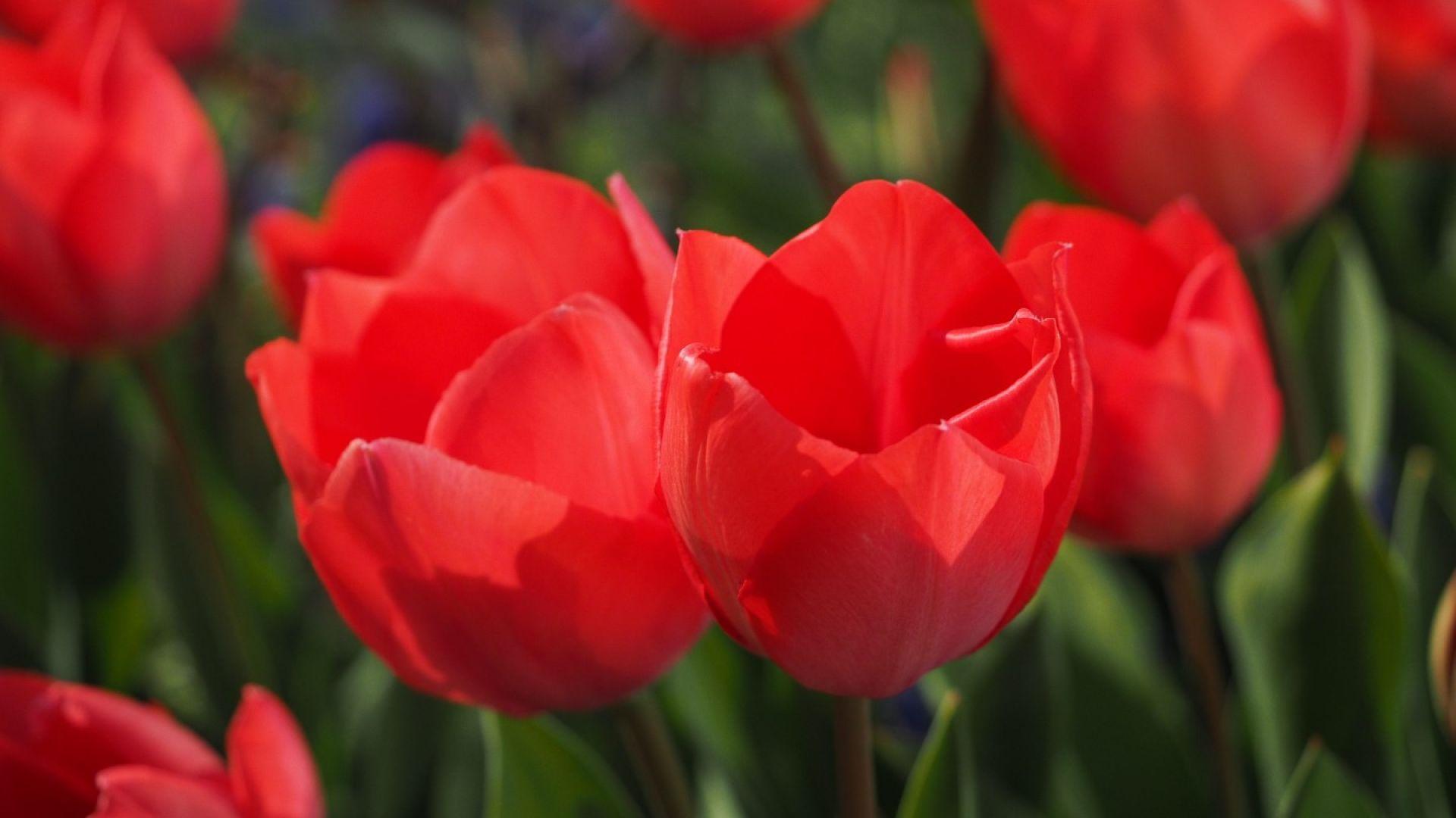 Пролетта се завръща с температури до 23 градуса в края на седмицата