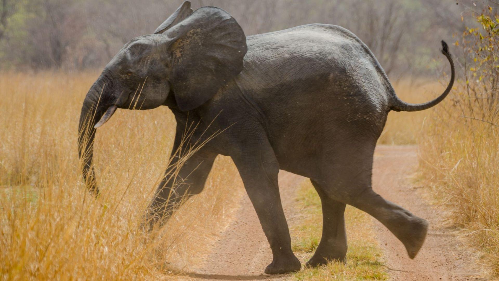 Слоновете могат да броят
