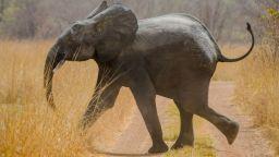 55 слона са умрели от глад в най-големия национален парк в Зимбабве