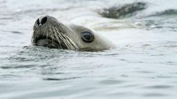 Експерти: Задава се изчезване на 1 млн. видове - първото, причинено от човека