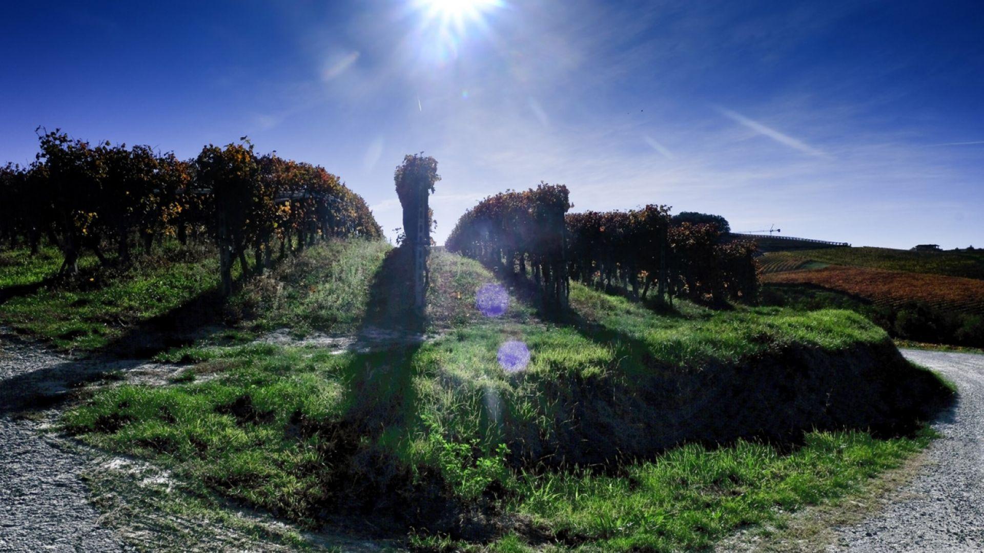 Франция прогнозира спад с 12% на производството на вино