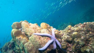 Загиват 17 на сто от морските видове, ако затоплянето продължи