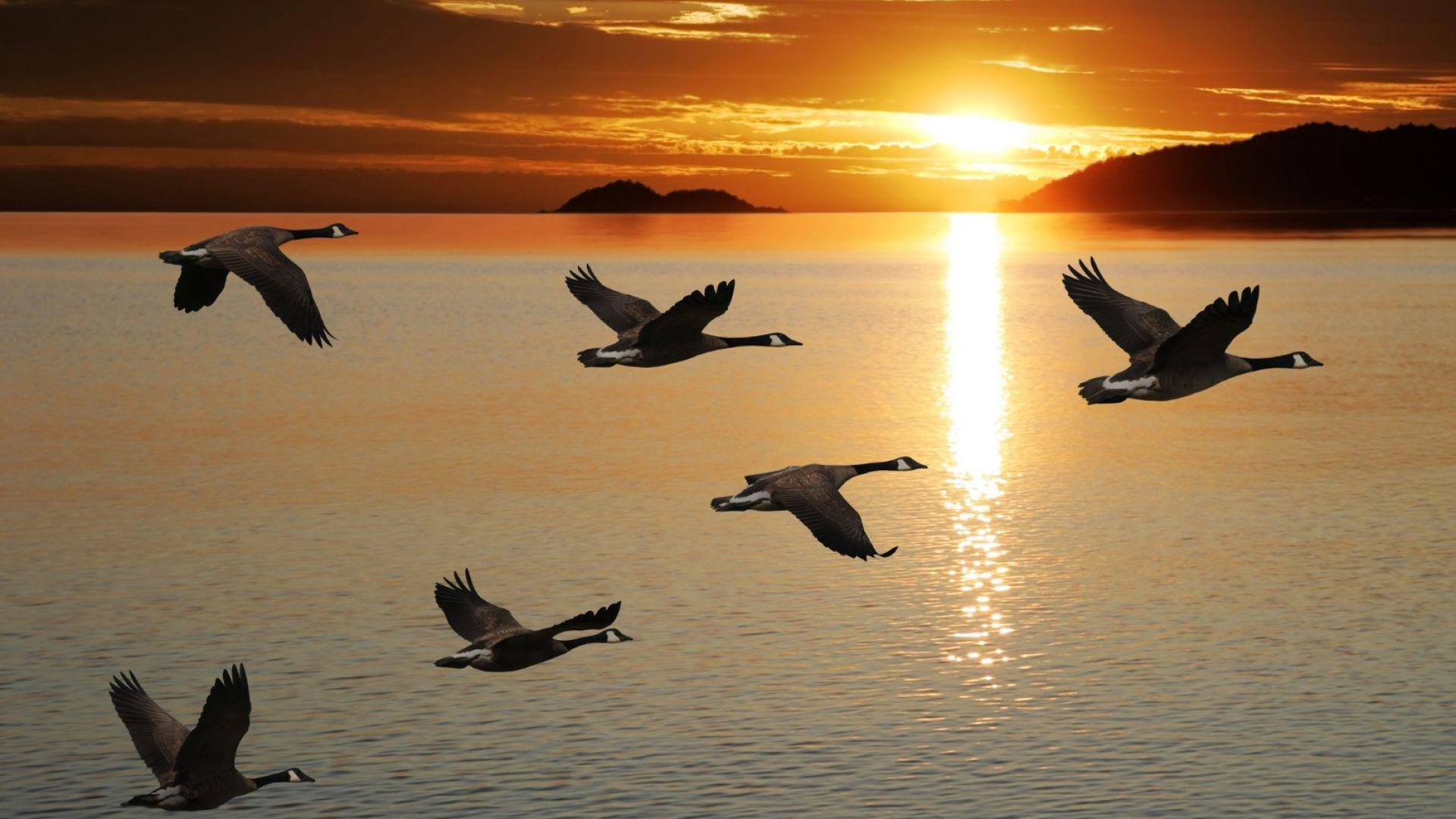 Днес е международният ден на прелетните птици (галерия)