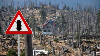 Опасни насекоми унищожават шведските гори, има ги и у нас