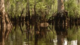 Дърво на 2624 години беше открито в САЩ (видео)