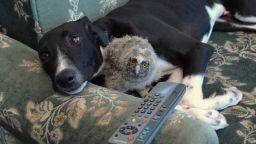 Животинска дружба по човешки