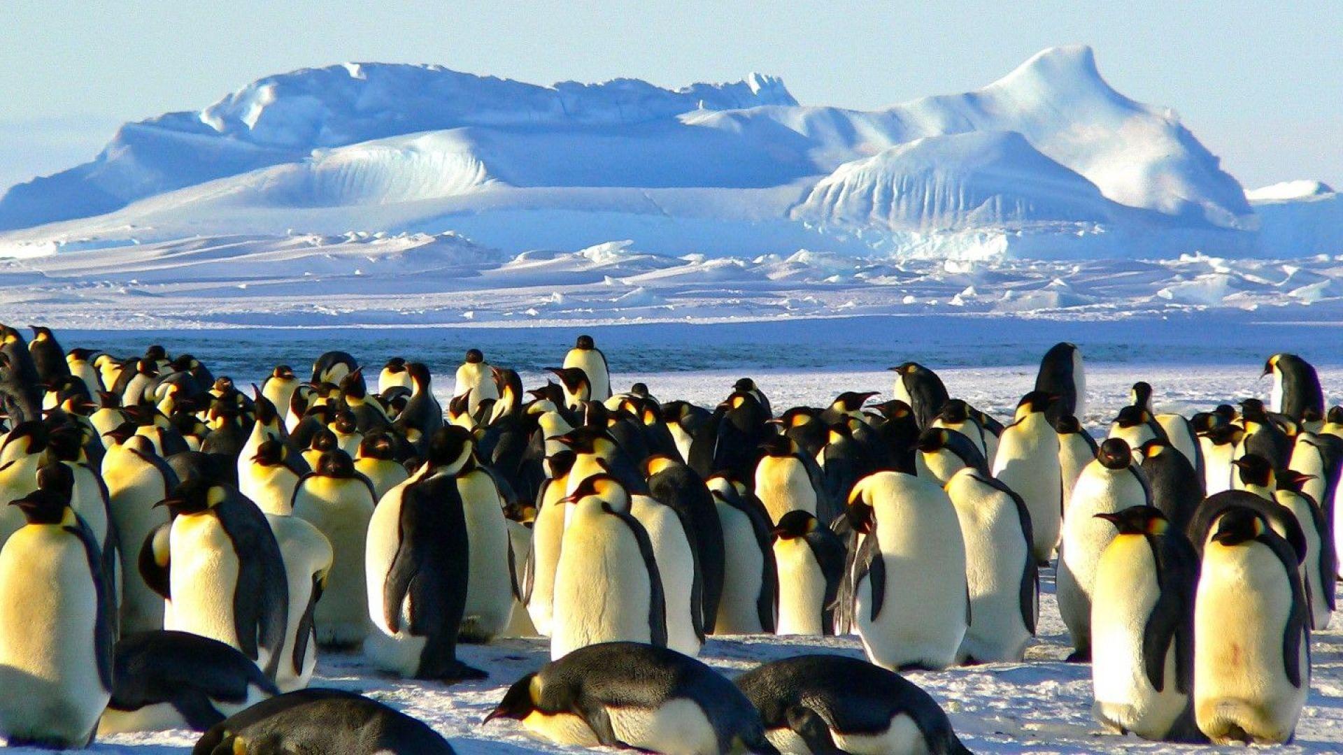 Следвай пингвина! Къде в Антарктика кипи живот?