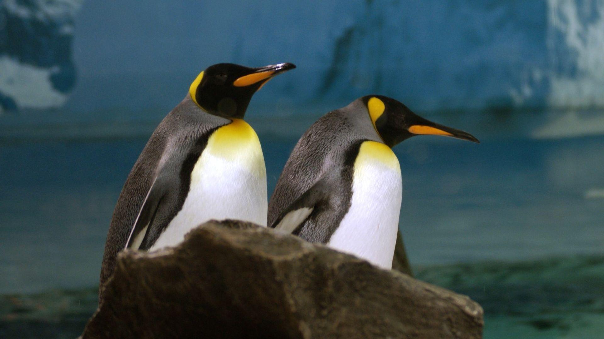 Имат ли връзка пингвините с озоновата дупка?