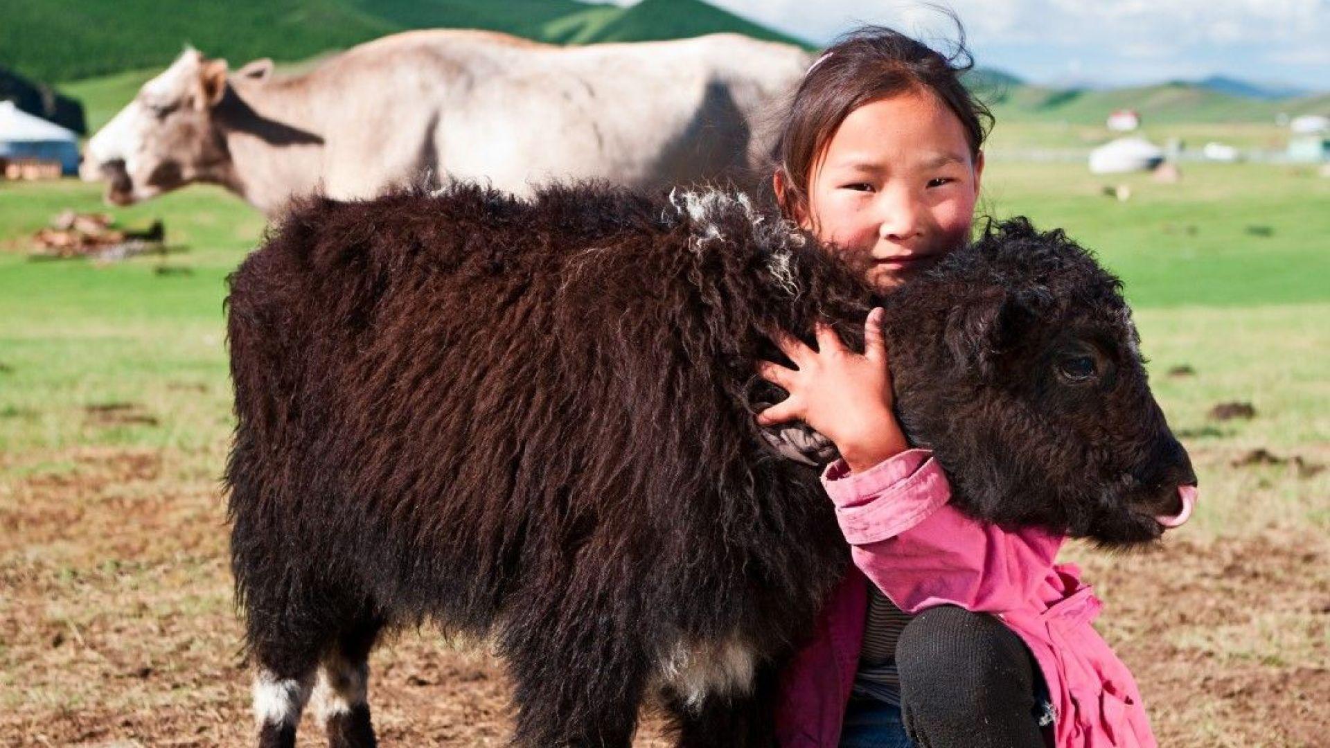 Обилен сняг в Индия уби 300 тибетски яка