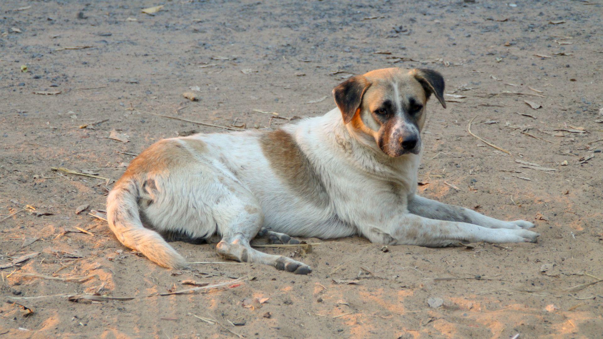 Жителите на Пазарджик се разминаха с глоби за хранене на бездомни кучета